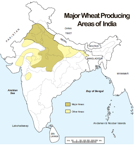 Major-Wheat-Producing-areas-of-India